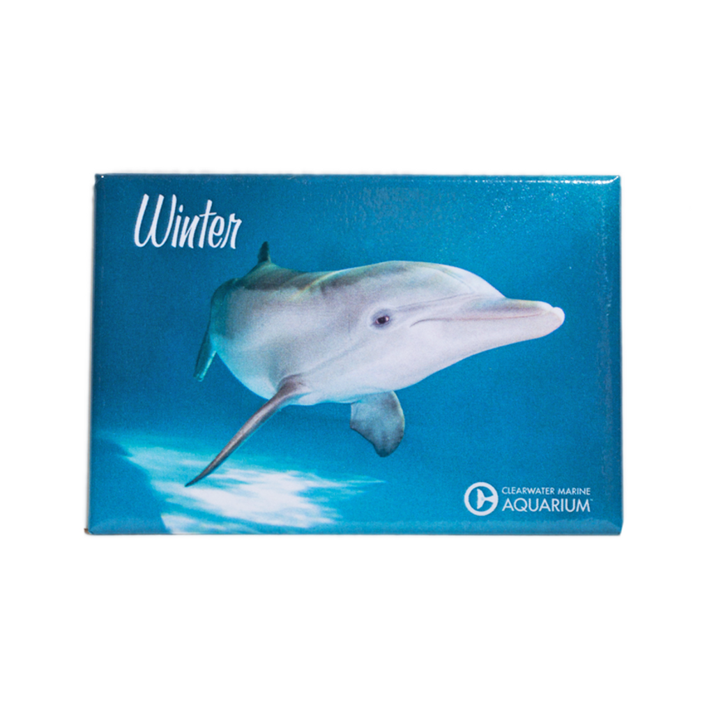 Winter the Dolphin Side View Rectangle Magnet