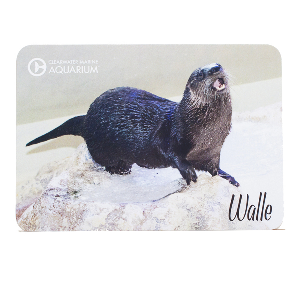 Walle the Otter Postcard