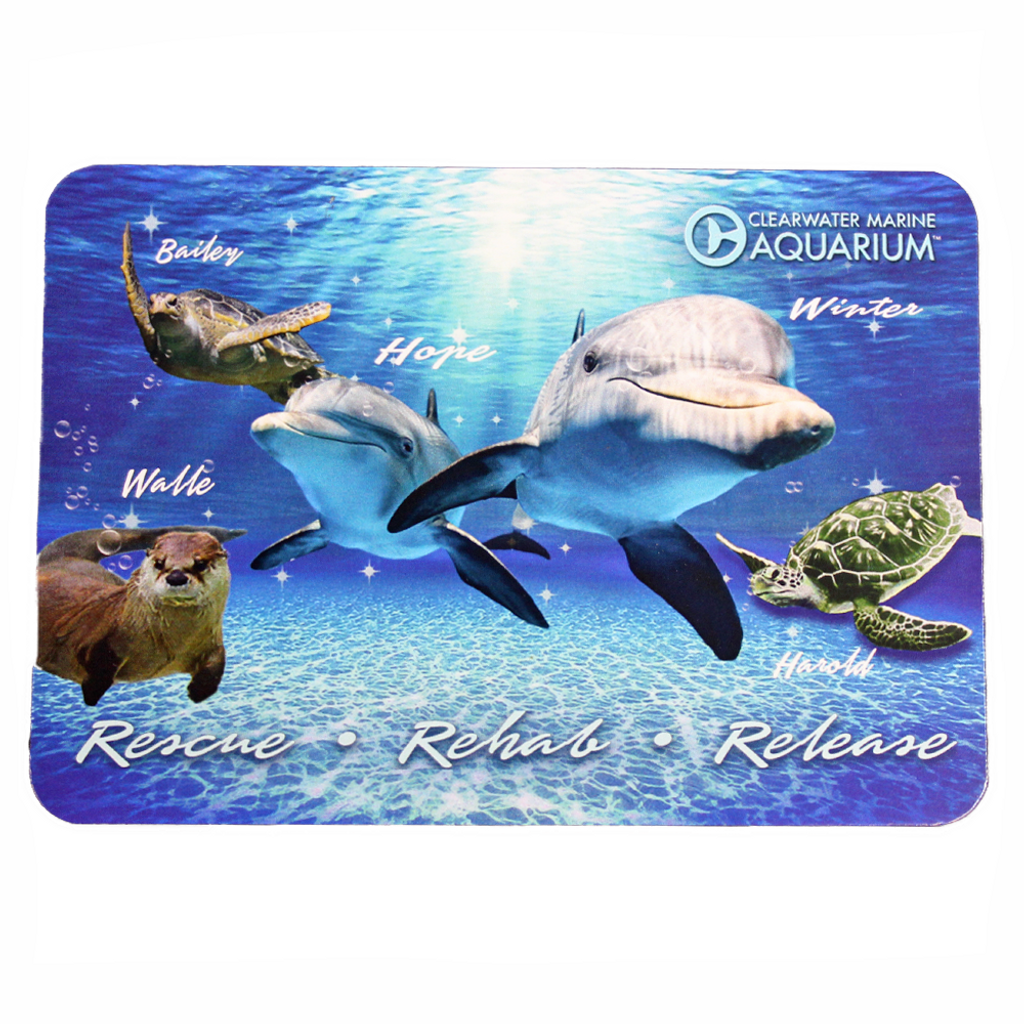 Clearwater Marine Aquarium Residents Postcard