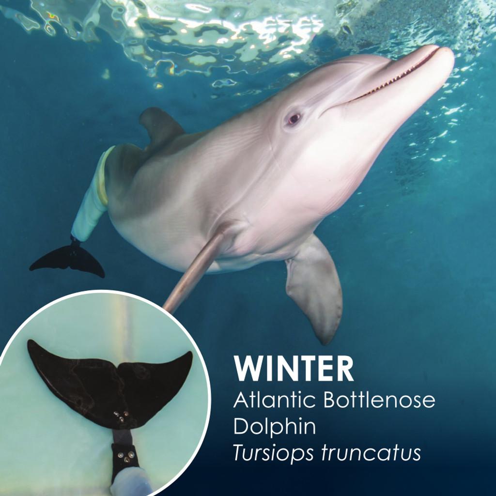 Clearwater Marine Aquarium Official Fluke Series  - Winter