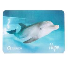 Hope the Dolphin Postcard