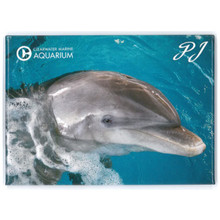 PJ the Dolphin Rectangle Magnet