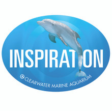 Winter the Dolphin Inspiration Car Magnet