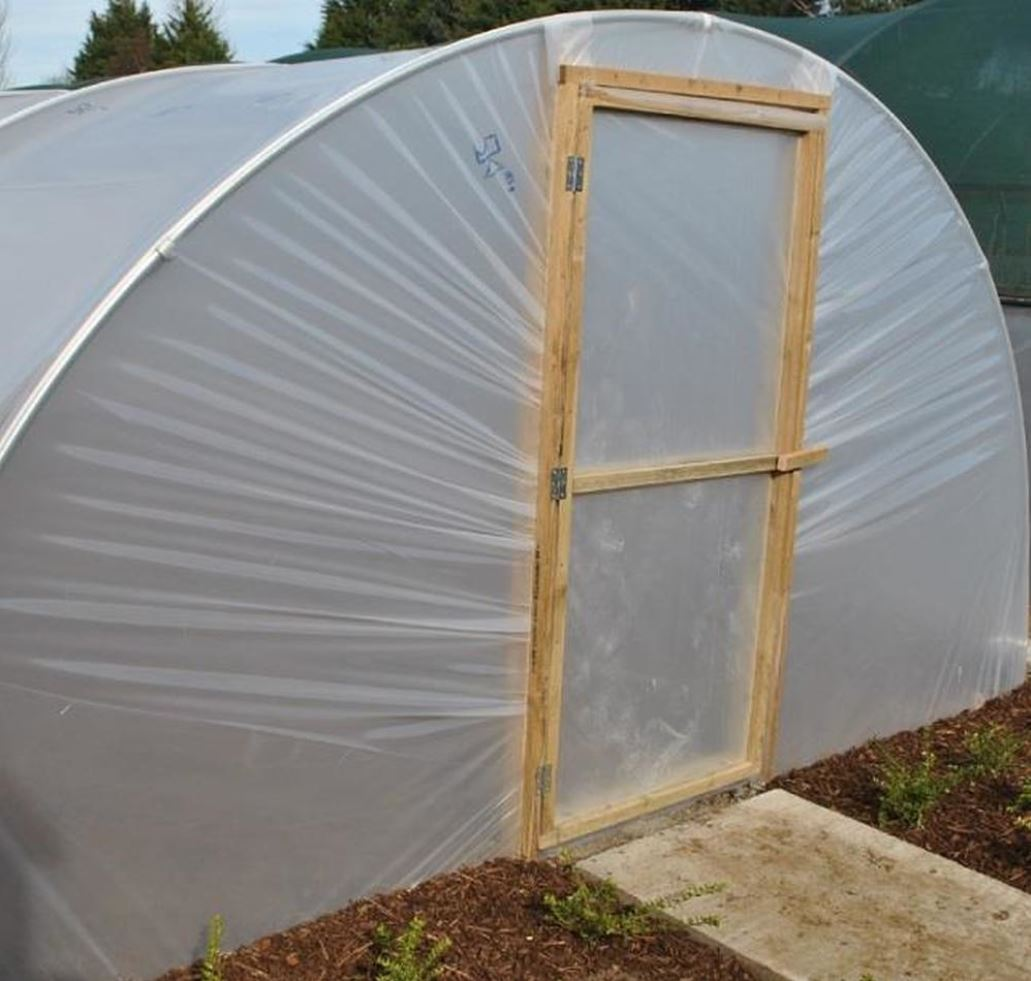 Summer in the polytunnel