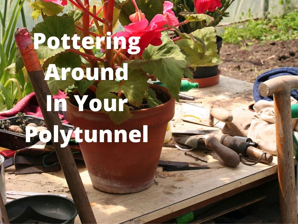 5 ways to improve your polytunnel