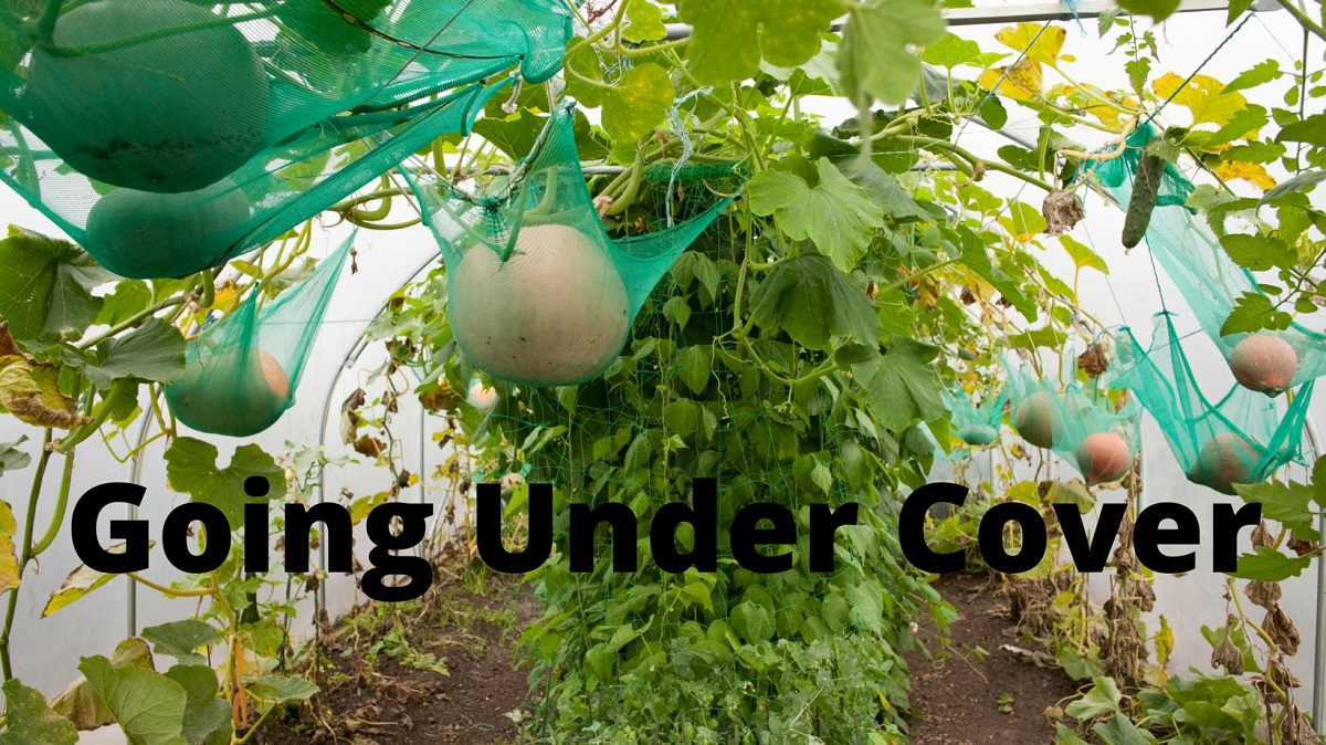 What is under cover gardening?