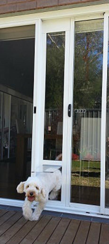 Cavoodle using our medium flap size pet door insert