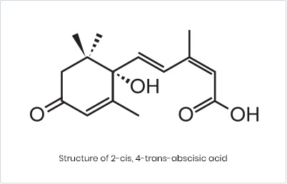 What is Abscisic acid?