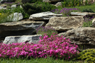 Perennial Plants- Flower Bed Perfection
