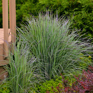 Landscaping With Native Grasses Is Quick, Easy & Low Maintenance