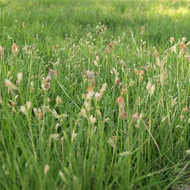 Top 3 Native kinds of grass For Landscaping