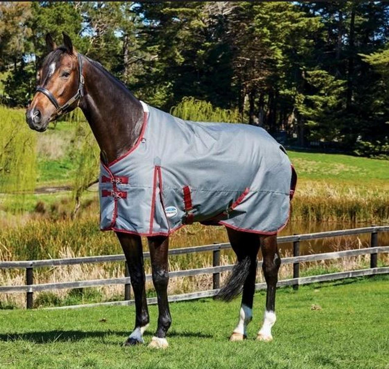 WeatherBeeta Cotton Show SheetHorses /& Ponies