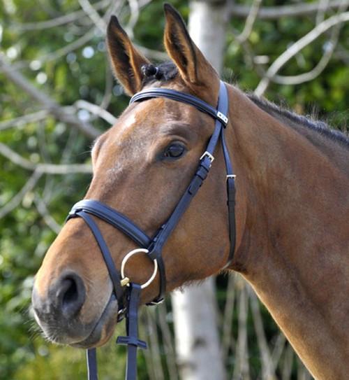 Dressage Bridles, Shop Dressage Horse Bridles at Mary's