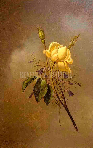 White Rose Against A Cloudy Sky by Martin Johnson Heade