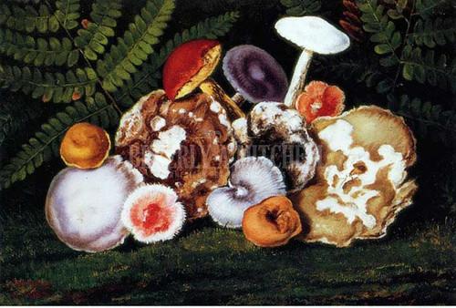 Mushrooms by William Aiken Walker