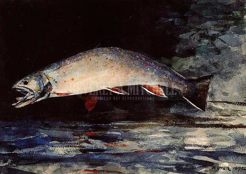 A Brook Trout by Winslow Homer