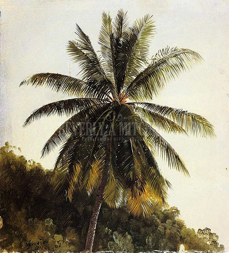 Palm Trees West Indies by Frederic Edwin Church
