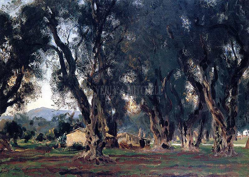 Olive Trees At Corfu by John Singer Sargent