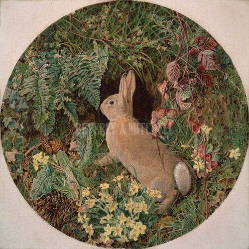 Rabbit Amid Ferns And Flowering Plants By Webbe William J.