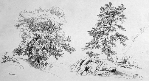 Chestnut And Pine By Johnson David