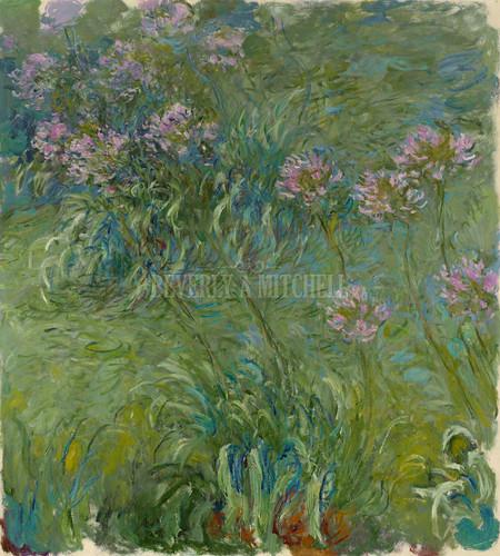 Agapanthus By Monet Claude