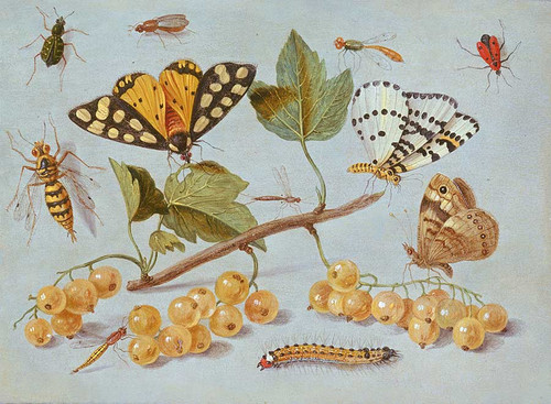 Study Of Butterfly And Insects By Jan Van Kessel