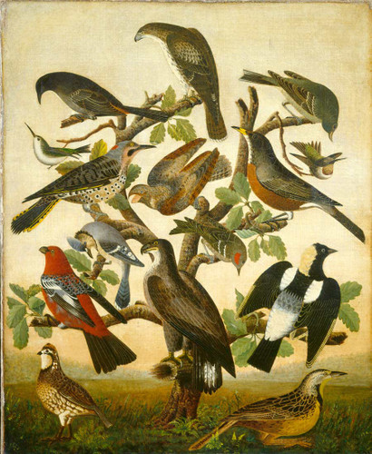 Birds By American 19th Century