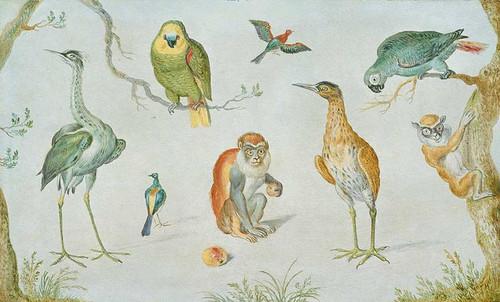 Study Of Birds And Monkeys By Circle Of Jan Van Kessel
