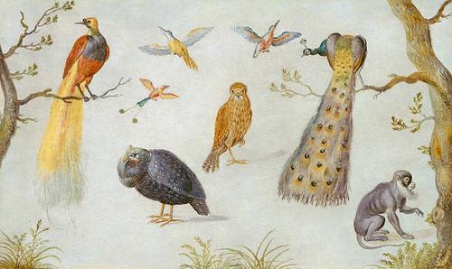 Study Of Birds And Monkey By Circle Of Jan Van Kessel