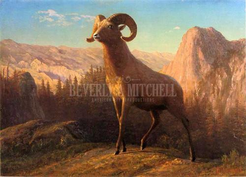 A Rocky Mountain Sheep Ovis Montana by Albert Bierstadt