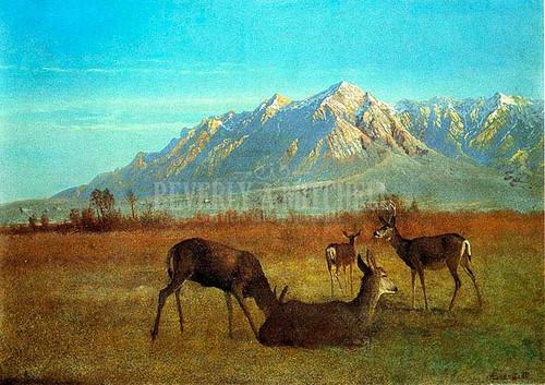 Deer In A Mountain Home by Albert Bierstadt