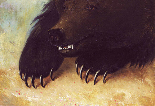 Weapons And Physiognomy Of The Grizzly Bear By George Catlin