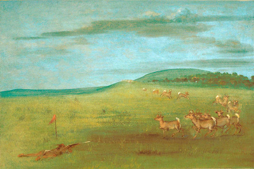 Antelope Shooting Decoyed Up By George Catlin
