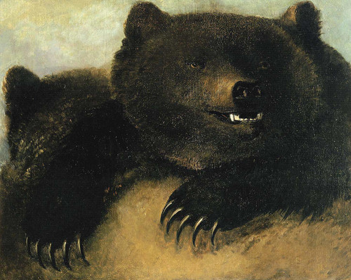 Weapons And Physiognomy Of The Grizzly Bear 1 By George Catlin