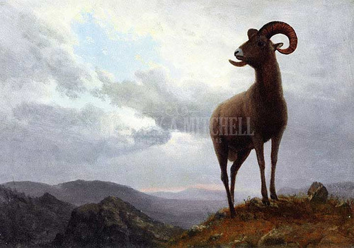 Long Horned Sheep by Albert Bierstadt