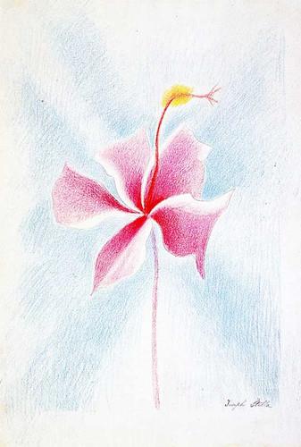 Pink Flower By Joseph Stella