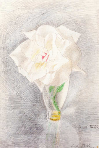White Rose In A Vase By Joseph Stella