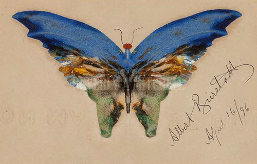 Blue Butterfly by Albert Bierstadt