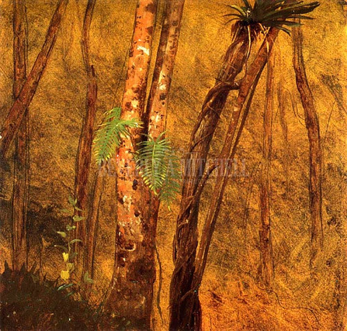 Plant Study Jamaica West Indies by Frederic Edwin Church