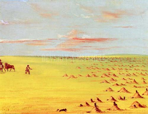 A Prairie Dog Village On The Upper Missouri by George Catlin