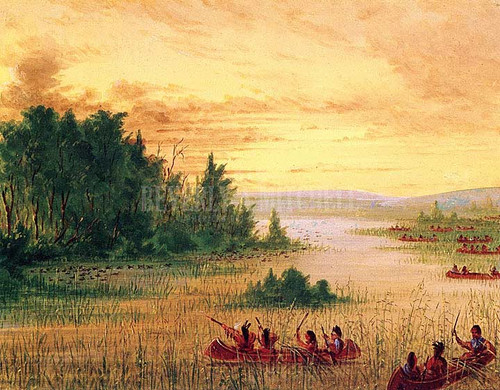 Ojibbeway Indians Gathering Wild Rice by George Catlin