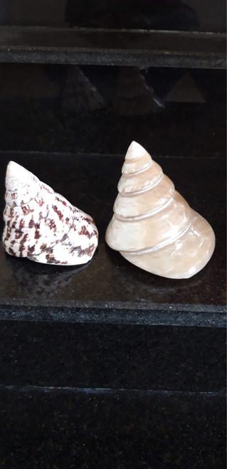 Cham Islands featured shells 004