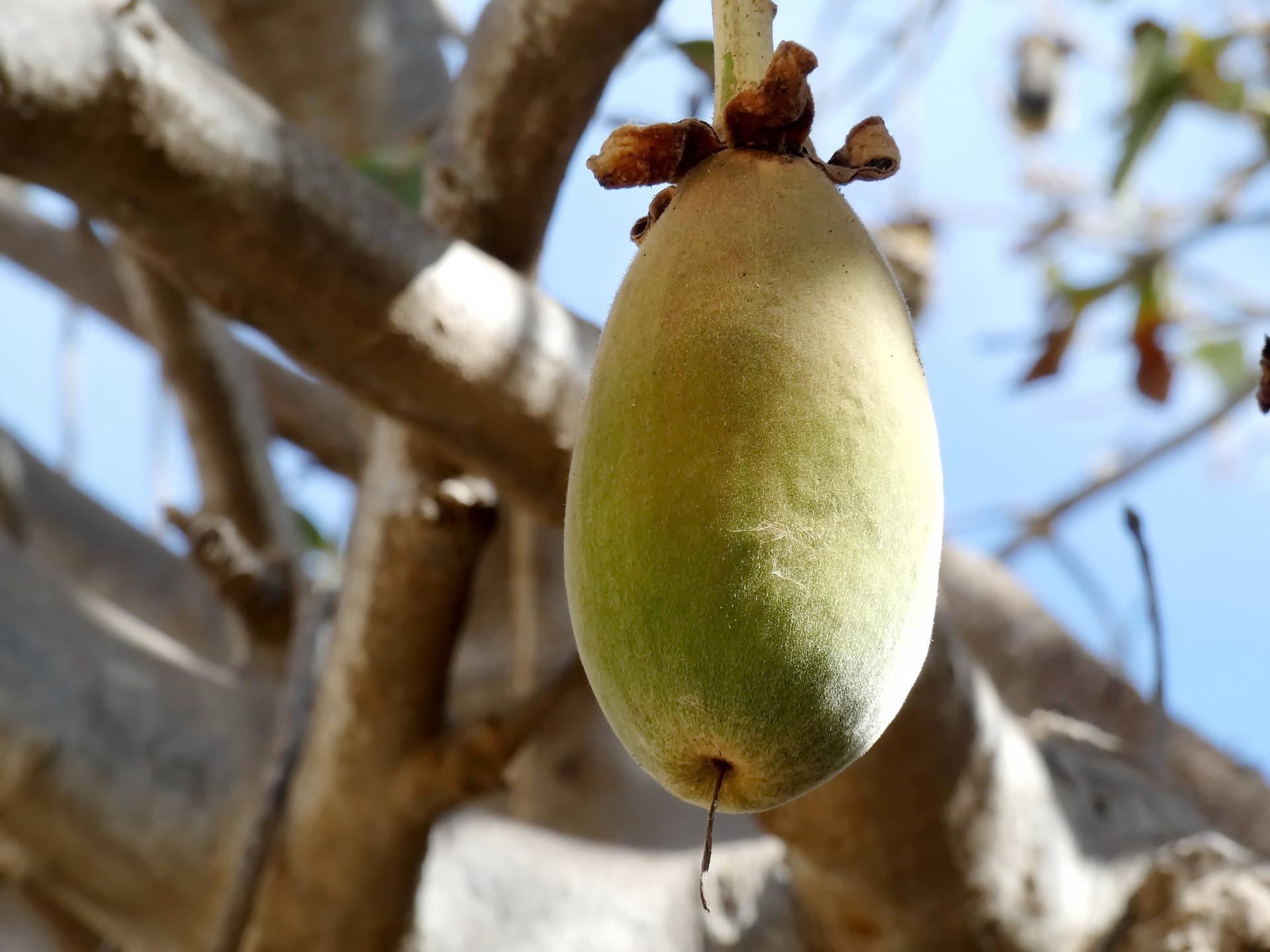 baobab-3977711-1920.jpg