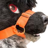 Muzzle Harness