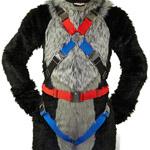 harnesssmall.jpg