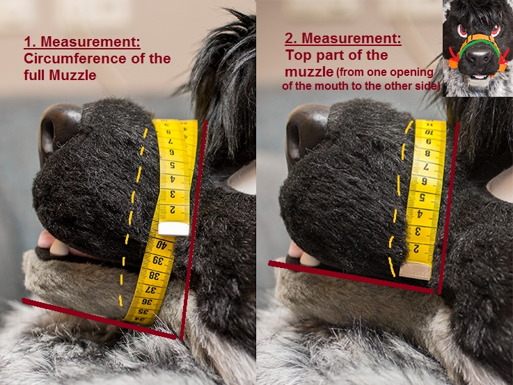 muzzlemeasurements.jpg