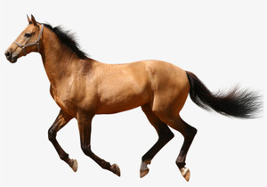 Free Mover Equine - 1kg