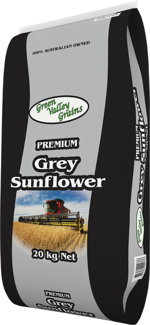 Grey Sunflower - Premium Australian Grown