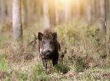 Wild Hog Hunter's Checklist