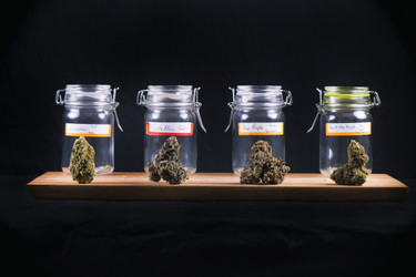 These Are the Medical Benefits of THC